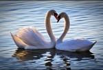 Sevgiyi Anlatan En Duygusal Mesajlar